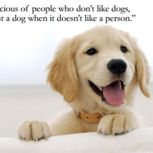 Sayings for dogs